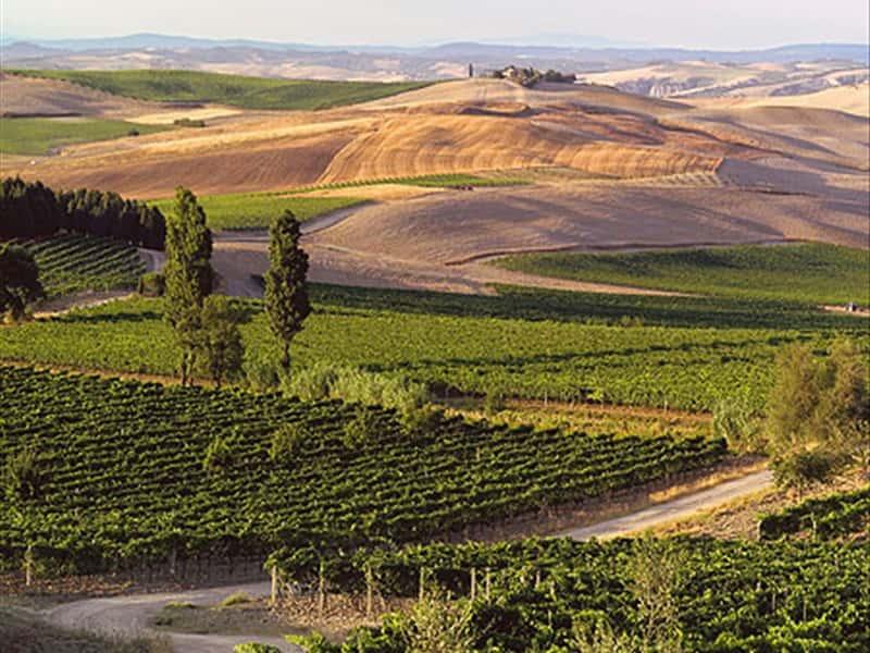La Fortuna Montalcino Wines Grappa Wines And Local
